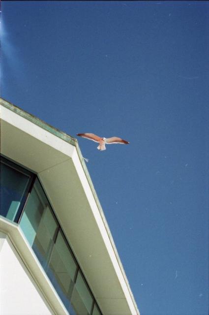 Gull Over Ruby's 010311-002