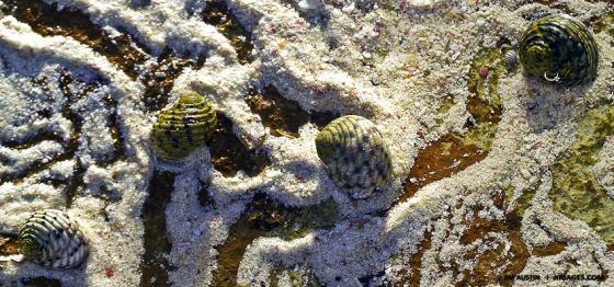 Underwater Shot Snail Trails Nikonos 4 a Fuji 400 Jim Austin Jimages