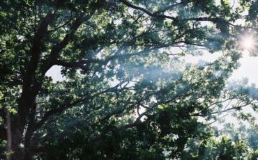 Sun Burst Through Tree's and BBQ Smoke