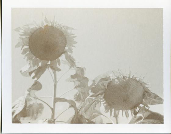 Polaroid_Sepia_002