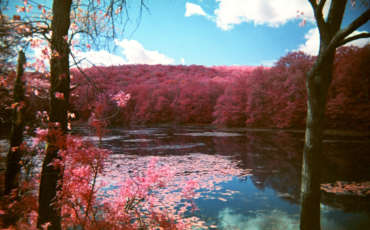 FPP Color Infrared Film Camera Image